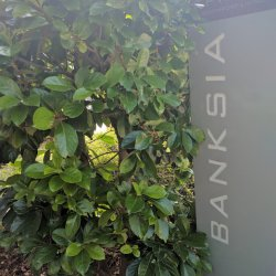 Unit 5 Banksia