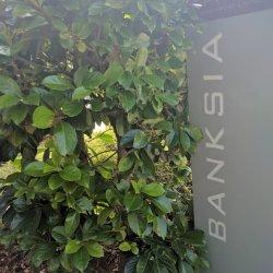 Unit 1 Banksia
